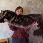 Самый большой кот в мире