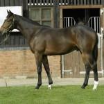 Самая быстрая в мире лошадь