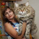 Самая большая в мире кошка